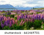stunning scenery with purple... | Shutterstock . vector #661469701