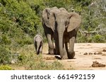 elephants and young walking... | Shutterstock . vector #661492159