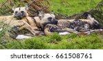 Three Painted Dogs Sleeping