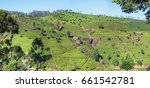 tea plantations on the mountain.... | Shutterstock . vector #661542781