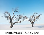 Two bare trees with snow against bright clear blue sky - stock photo