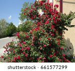 red rose bush in the shape of... | Shutterstock . vector #661577299