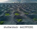 scenic view of wine growing in... | Shutterstock . vector #661595281