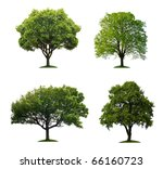 Stock photo trees isolated 66160723