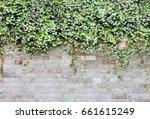 the beautiful decorative plant... | Shutterstock . vector #661615249