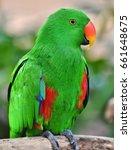 a male eclectus parrot ...   Shutterstock . vector #661648675