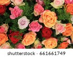 colorful wedding roses in a... | Shutterstock . vector #661661749