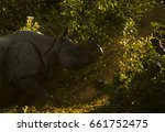 Small photo of One horned Rhino at Sunrise in Manas National Park Assam