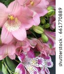 Small photo of alstroemerias. pink and purple alstroemerias. alstroemeria texture. many alstroemerias