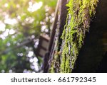 moss and lichen in forest ... | Shutterstock . vector #661792345