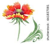 wildflower gaillardia flower in ...   Shutterstock . vector #661837081
