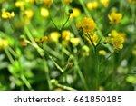 yellow flowers  | Shutterstock . vector #661850185
