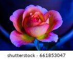 Still Life Fine Art Color Macr...
