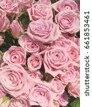 pink shabby roses. small pink... | Shutterstock . vector #661853461