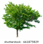 tree of isolated on white