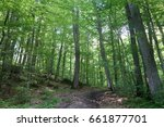 the carpathian forest.... | Shutterstock . vector #661877701