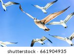 Seagull Flock In Sky
