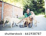 Stock photo dog walker with dogs enjoying in walk selective focus on man 661938787