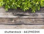 wood floor and green leaf | Shutterstock . vector #661940344