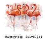 Beautiful Colorful Flamingos...