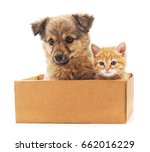 Stock photo kittens and a puppies in a box on a white background 662016229