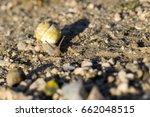 snail | Shutterstock . vector #662048515