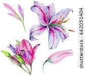 wildflower lily flower in a... | Shutterstock . vector #662051404