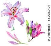 wildflower lily flower in a... | Shutterstock . vector #662051407