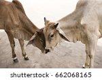 Jaisalmer  India 9 June 2017...