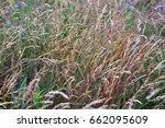 meadow grass | Shutterstock . vector #662095609