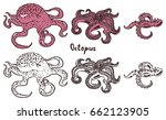 live octopus and tentacles of... | Shutterstock .eps vector #662123905