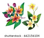 tropic flower | Shutterstock . vector #662156104