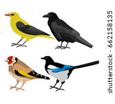 raven  goldfinch  ivory  magpie | Shutterstock . vector #662158135