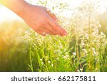 Small photo of Woman hand touching chamomile wildflowers closeup. Meadow field with wild flowers, Health care concept. Rural field. Hand Skin care treatment, Alternative medicine. Environment