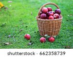 basket with apples on the grass | Shutterstock . vector #662358739