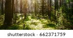 forest. wild plants and trees.... | Shutterstock . vector #662371759