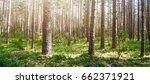 wild trees in forest. summer... | Shutterstock . vector #662371921