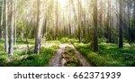 forest. ecology summer green... | Shutterstock . vector #662371939