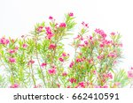 Pretty Red Flowering Herb Like...