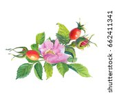 Rose Hip. Greeting Card With...