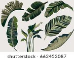 banana leaf vector set. | Shutterstock .eps vector #662452087