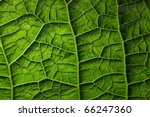 Green Leaf Background Texture ...