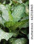 green leaf background | Shutterstock . vector #662518465