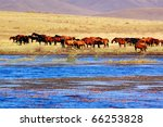Horses by the lake in Bashang grassland, Hebei, China. Bashang Grassland stretches from northern Hebei province into Inner Mongolia in China - stock photo