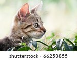 Stock photo cat plays and hides in the grass hidden cat in natural environment 66253855