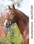 Small photo of Nice dutch warmblood with perfect hairstyle