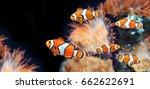 sea anemone and clown fish in... | Shutterstock . vector #662622691