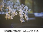 bouquet of white orchid flowers ... | Shutterstock . vector #662645515