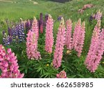 beautiful colorful blooming... | Shutterstock . vector #662658985
