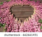 lupine  lupin. a plant of the...   Shutterstock . vector #662661451